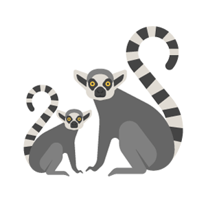 Ring tailed lemur Free Vector Illustration